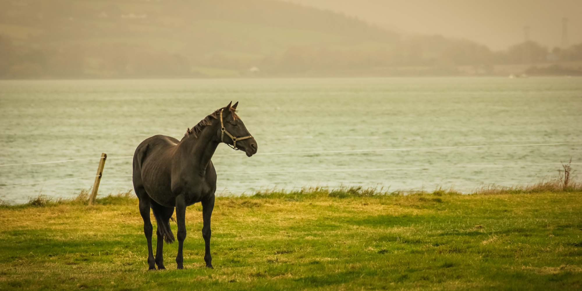 Horse in Irish field